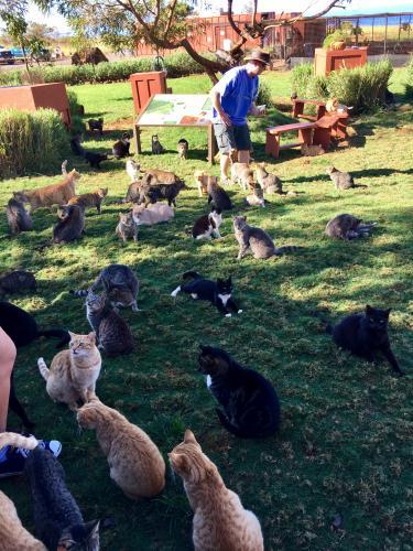 Proteggendo i gattini