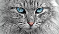 12 gatti che si schiacciano un pisolino nei posti più strani