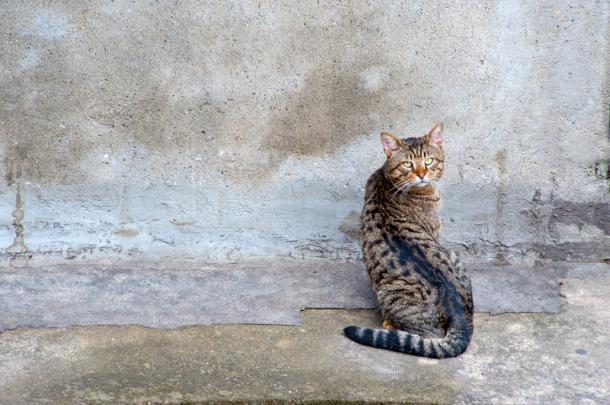 Se il tuo gatto sta sempre con la testa rivolta verso la parete