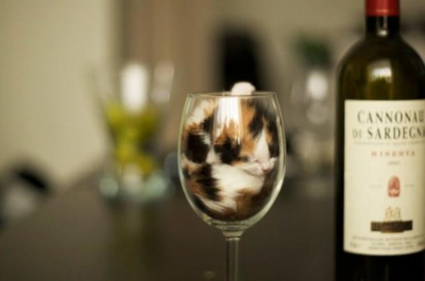 Il bicchiere, il posto preferito dei gatti