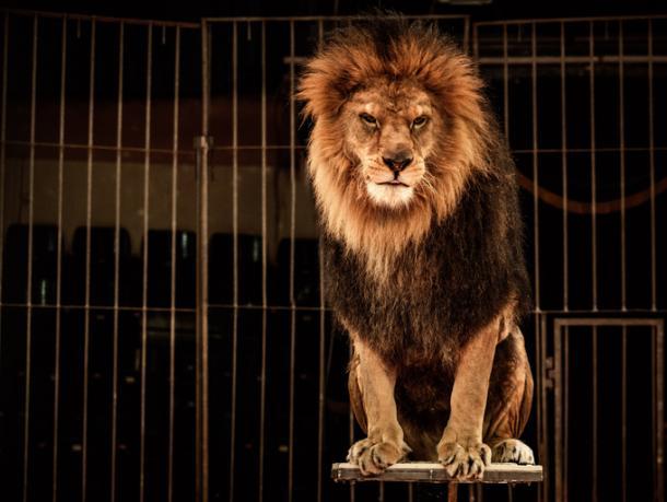 Basta animali al circo