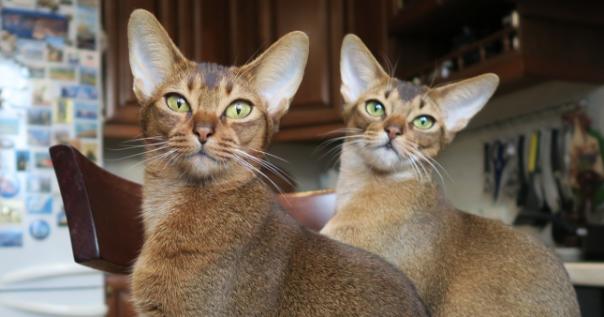 I superpoteri dei gatti che noi umano non sospettiamo neanche