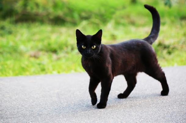 Londra ferma il killer seriale di gatti