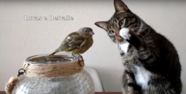 Il gatto e il pappagallino