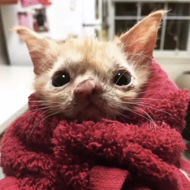 Una gattina speciale