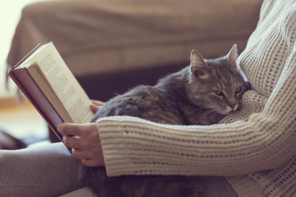 Le cose più belle dei gatti