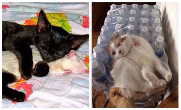 Le foto che dimostrano che questi gatti hanno fallito miseramente
