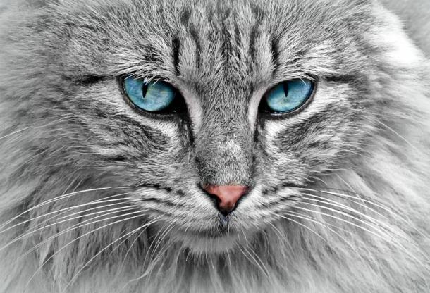 Il potere dei gatti? Starebbe nel loro esoterismo...