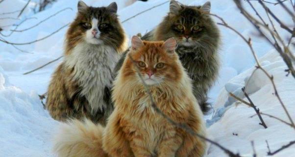 Il potere esoterico dei gatti :)