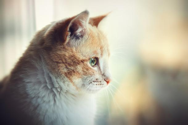 L'età dei gatti