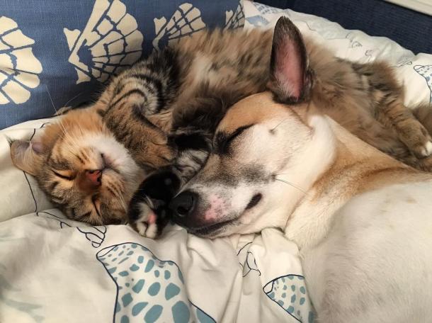 Una bella amicizia