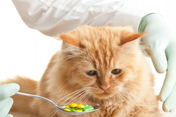 Dare le medicine al gatto?