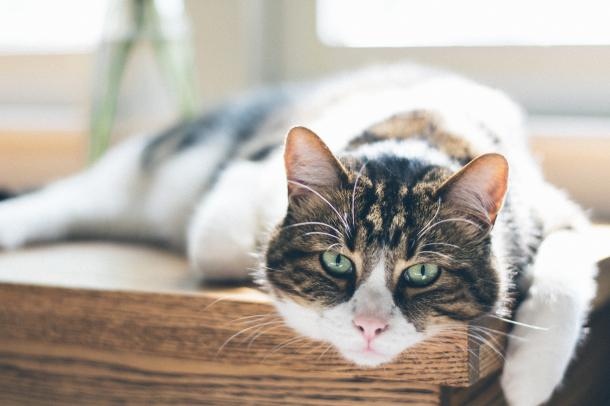 Il primo gatto del mondo salvato da un tumore ...