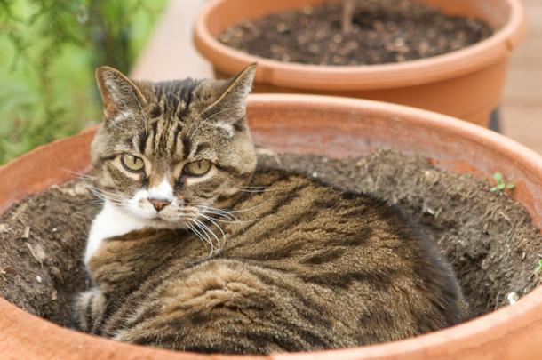 Piante e gatti: missione impossibile