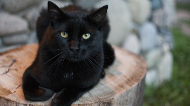 Indovinate chi è il migliore amico ultra selvaggio di questo gatto??