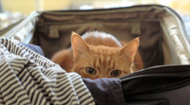 Vacanze: come organizzarti quando hai un gatto