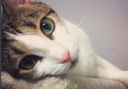 Il gatto senza memoria, la sua storia vi farà sciogliere