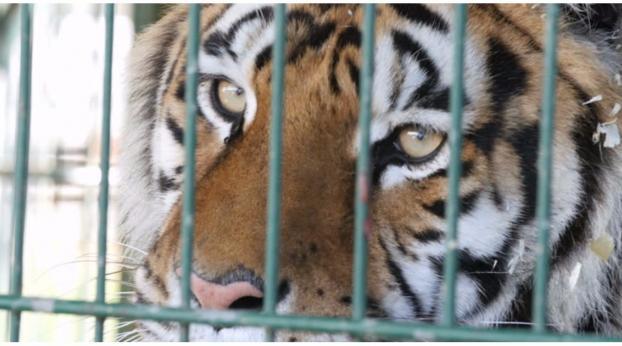 Il circo con gli animali, un'usanza che sembra finita...