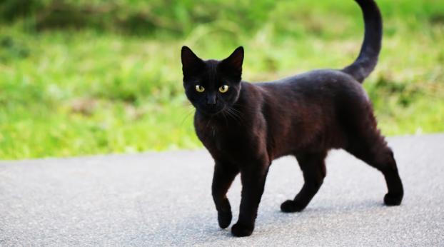 Bastona un gatto e prende 4 mesi di reclusione, ecco la pena esemplare