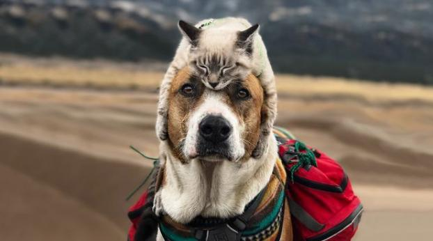 Un cane e un gatto, compagni perfetti di questo viaggio on the road