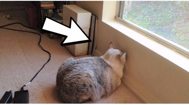 Se il tuo gatto fa così, portalo seduta stante dal veterinario