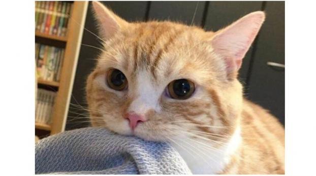 Perché il tuo gatto mangiucchia le coperte?