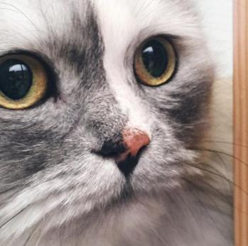 I gatti hanno i superpoteri, ecco tutti i fenomeni che sono in grado di percepire e che agli uman...