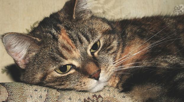 La legge le proibisce di tenere animali domestici, ecco perché...
