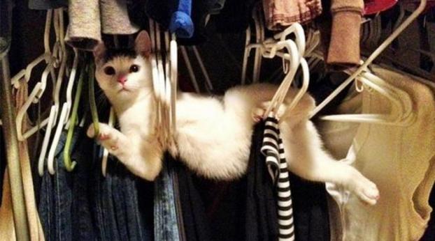 5 Fatti curiosi sui gatti che sicuramente non conosci...