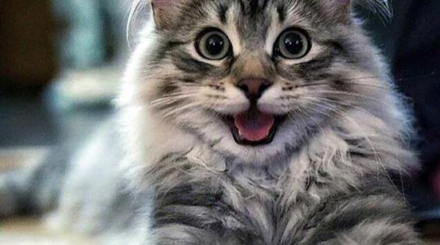 """Come ti dice """"ti amo"""" il tuo gatto?"""
