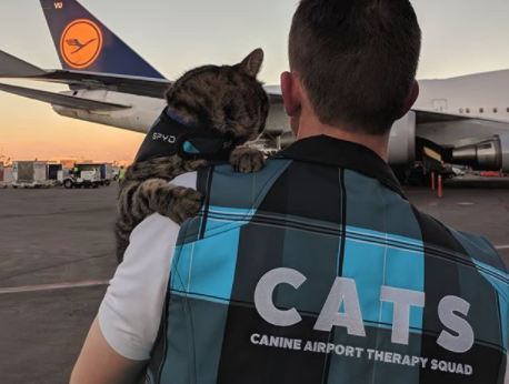 L'improbabile missione di questo gatto all'aeroporto