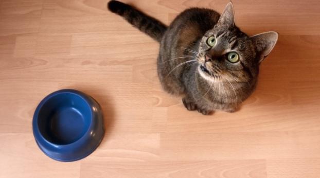 Perché il mio gatto ha SEMPRE FAME?