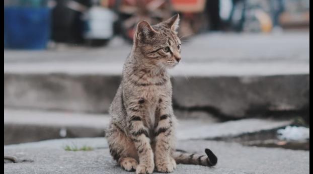 Londra: Scotland Yard per braccare il killer dei gatti