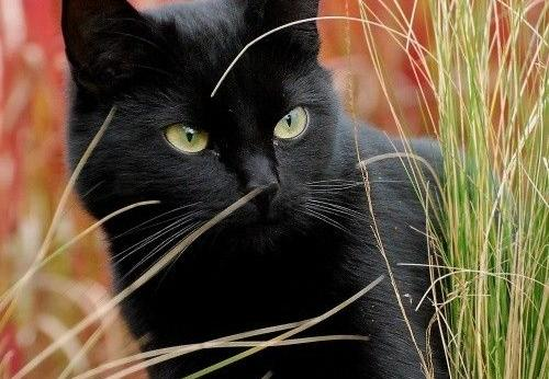Questo gatto super coraggioso salva una bimba da un animale pericolosissimo....