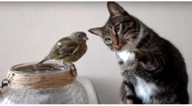 Questo gatto fa conoscenza con questo pappagallo...