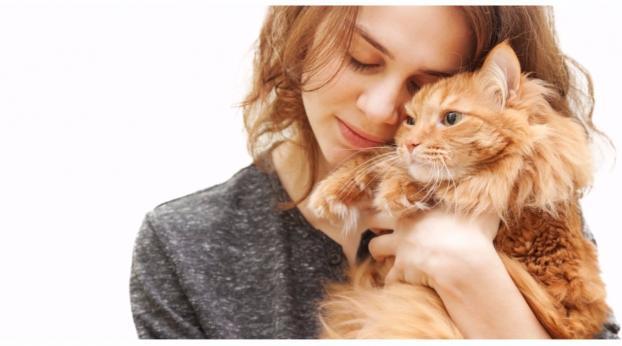 Il potentissimo effetto delle coccole dei gatti