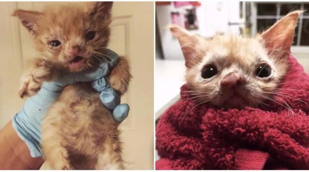 Questa studentessa di veterinaria ha riscattato una gattina molto speciale. Un mese dopo, ecco co...