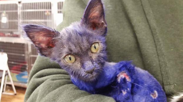 Ricordi il gattino trovato ricoperto di vernice viola? Ecco com'è oggi?