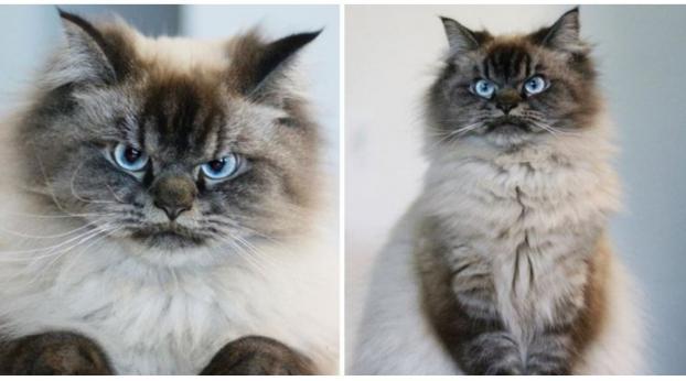 Perché questo gatto è così furioso??