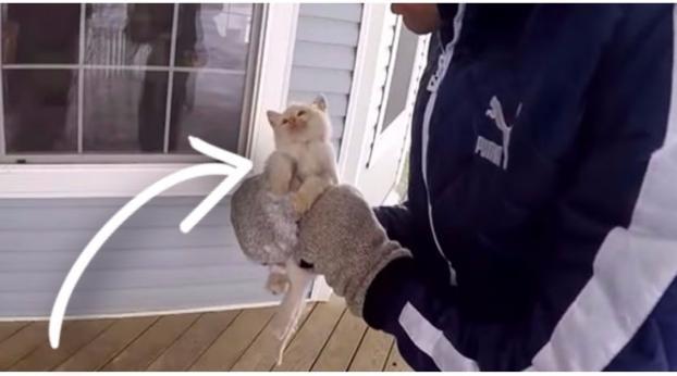 Trova un gatto completamente congelato, incredibile cosa succede...