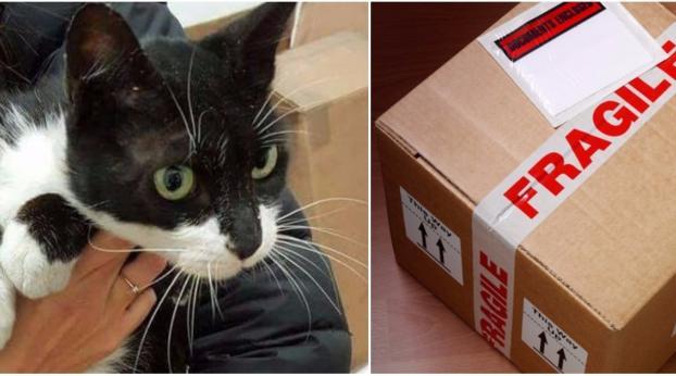 Si addormenta in una scatole e si risveglia a...Incredibile!!