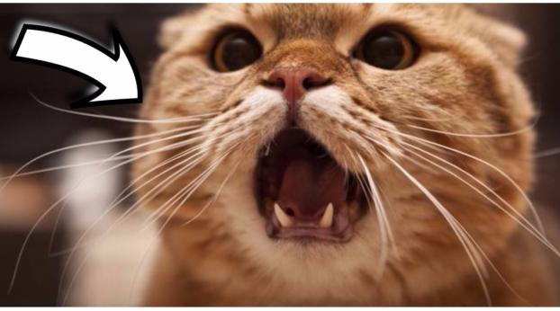 Il tuo gatto non ha appetito? Questa potrebbe essere la causa...