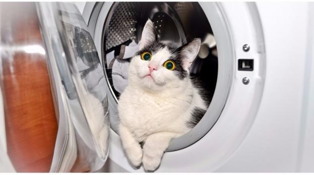 I posti in cui il tuo gatto potrebbe essersi nascosto