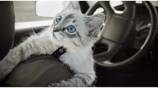 I consigli per portare il tuo micio in auto, senza farlo soffrire