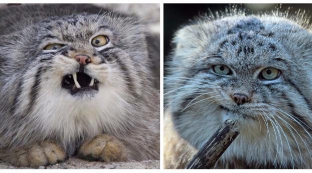 Le più belle espressioni facciali dei gatti
