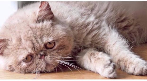 L'operazione che molti fanno ma che non è molto salutare per i gatti...
