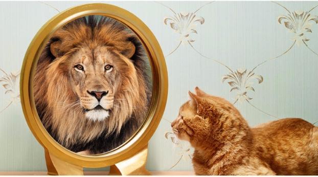 Se a volte hai l'impressione che il tuo gatto si creda un leone, ti spieghiamo perché...
