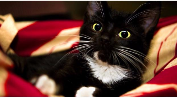 Perché non si dovrebbero mai toccare i baffi ai gatti