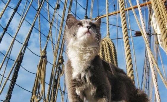 La storia incredibile di Trim, il gatto che ha fatto il giro del mondo.